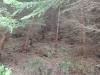 traseu-spre-grota-parintelui-arsenie-boca-33-tabara-initiatica-la-grota-parintelui-arsenie-boca-in-perioada-02-04-august-2013-organizator-interad