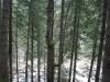 traseu-spre-grota-parintelui-arsenie-boca-34-tabara-initiatica-la-grota-parintelui-arsenie-boca-in-perioada-02-04-august-2013-organizator-interad