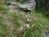 traseu-spre-grota-parintelui-arsenie-boca-83-tabara-initiatica-la-grota-parintelui-arsenie-boca-in-perioada-02-04-august-2013-organizator-interad