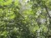 traseul-de-la-grota-parintelui-arsenie-boca-14-tabara-initiatica-la-grota-parintelui-arsenie-boca-in-perioada-02-04-august-2013-organizator-interad