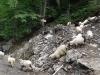 turma-de-oi-1-tabara-initiatica-la-grota-parintelui-arsenie-boca-in-perioada-02-04-august-2013-organizator-interad