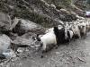 turma-de-oi-2-tabara-initiatica-la-grota-parintelui-arsenie-boca-in-perioada-02-04-august-2013-organizator-interad