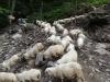 turma-de-oi-6-tabara-initiatica-la-grota-parintelui-arsenie-boca-in-perioada-02-04-august-2013-organizator-interad