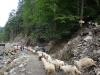 turma-de-oi-7-tabara-initiatica-la-grota-parintelui-arsenie-boca-in-perioada-02-04-august-2013-organizator-interad