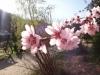 pensiunea-cotiso-23-martie-2014-01