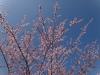 pensiunea-cotiso-23-martie-2014-02