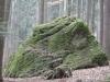 capul-de-dinozaur-11-in-23-februarie-2014