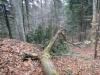 capul-de-dinozaur-64-in-23-februarie-2014