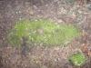 pietrele-misterioase-din-busteni-40-in-23-februarie-2014