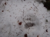 pietrele-misterioase-si-ursul-01-busteni-23-02-2014