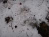 pietrele-misterioase-si-ursul-02-busteni-23-02-2014