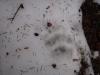 pietrele-misterioase-si-ursul-04-busteni-23-02-2014