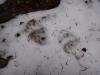 pietrele-misterioase-si-ursul-05-busteni-23-02-2014