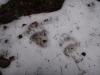 pietrele-misterioase-si-ursul-06-busteni-23-02-2014
