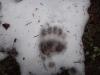 pietrele-misterioase-si-ursul-07-busteni-23-02-2014