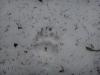 pietrele-misterioase-si-ursul-09-busteni-23-02-2014