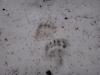 pietrele-misterioase-si-ursul-10-busteni-23-02-2014
