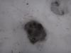 pietrele-misterioase-si-ursul-11-busteni-23-02-2014