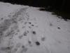 pietrele-misterioase-si-ursul-13-busteni-23-02-2014