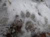 pietrele-misterioase-si-ursul-14-busteni-23-02-2014