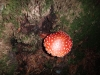 ciuperca-tabara-initiatica-interad-29-septembrie-2013