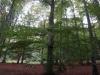 pietrele-piticilor-12-tabara-initiatica-interad-29-septembrie-2013